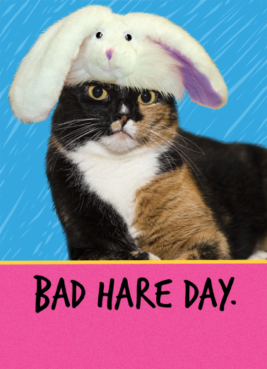 Bad Hare Day Easter Ecard Cover