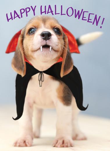 Barkula Halloween Card Cover