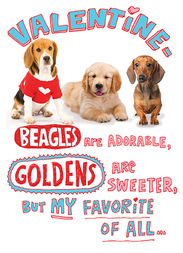 Beagles are Adorable Valentine's Day Card Cover