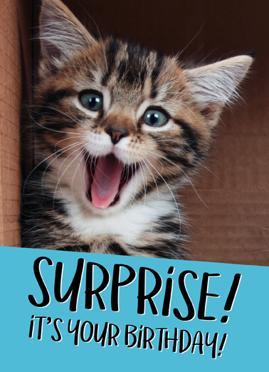 Cat Birthday Surprise Funny Animals Ecard Cover