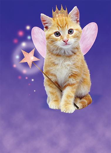 Cat Fairy Funny Animals Ecard Cover