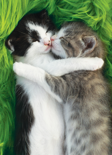 Cat Hug St Pat St. Patrick's Day Card Cover