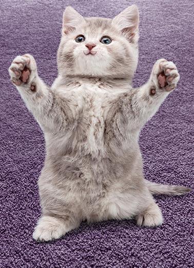 Cat Hug bday Funny Animals Ecard Cover