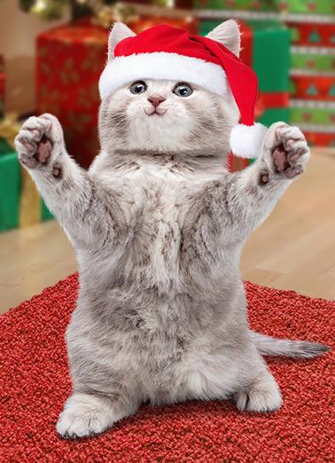 Cat Hug xmas Christmas Card Cover