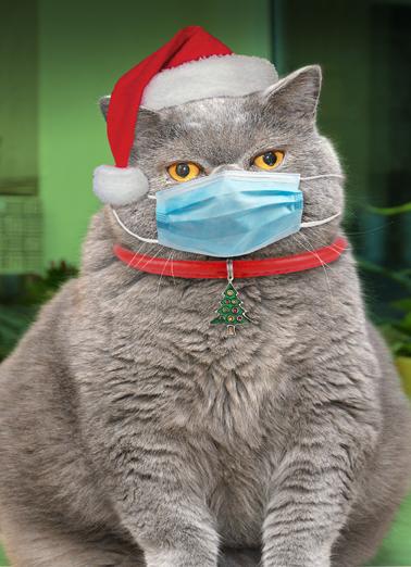Cat Mask Xmas Christmas Card Cover