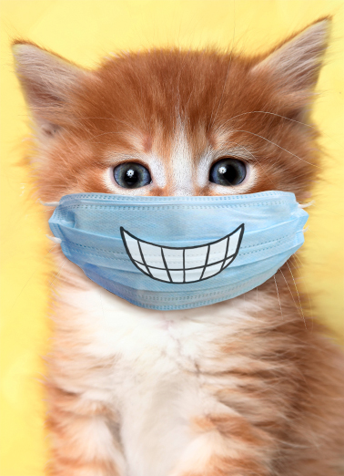 Cat Wearing Mask Everyday Quarantine Card Cover