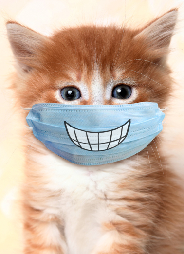 Cat Wearing Mask Birthday Card Cover