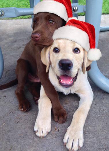 Christmas Hug Christmas Ecard Cover