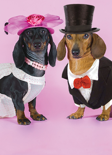 Dachshund Couple Dachshund Card Cover