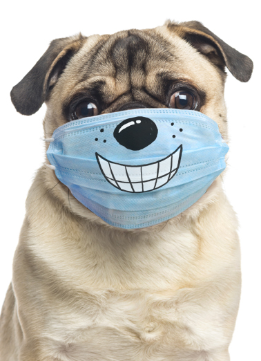 Dog Wearing Mask Birthday Card Cover