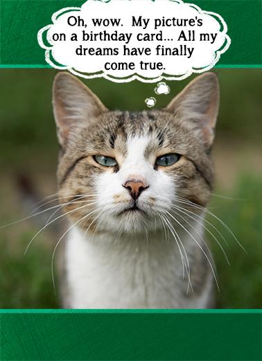 Dreams Come True Funny Animals Ecard Cover