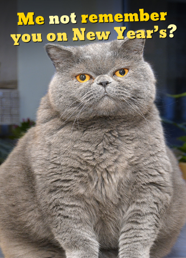 Fat Chance New Year Funny Animals Ecard Cover