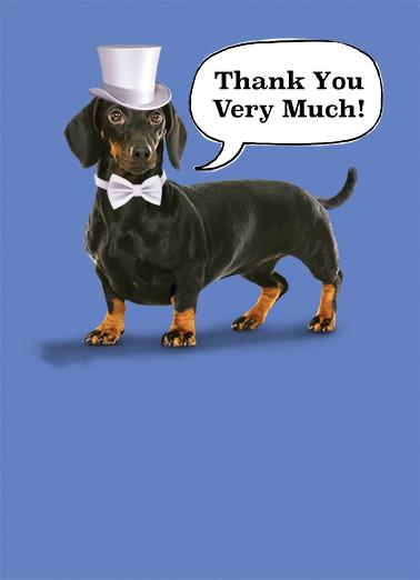 Formal Dog Dachshund Card Cover