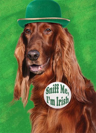 Irish Setter St. Patrick's Day Ecard Cover