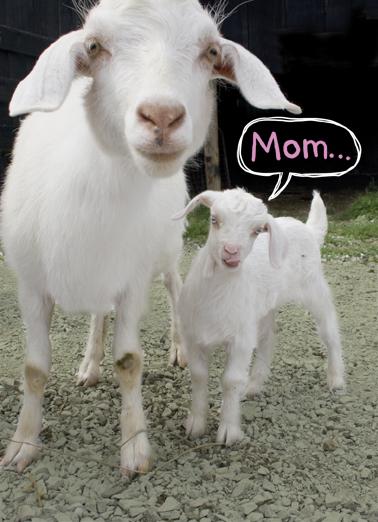 Kid Cute Animals Ecard Cover
