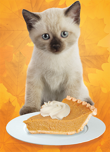 Kitty Pie  Card Cover