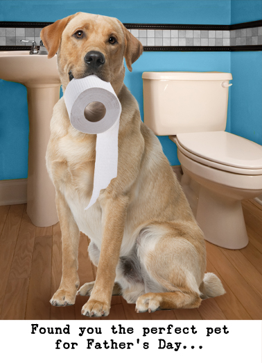 Lavatory Retriever (FD) Father's Day Card Cover