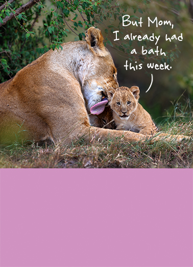 Lions Bath MD Funny Animals Ecard Cover