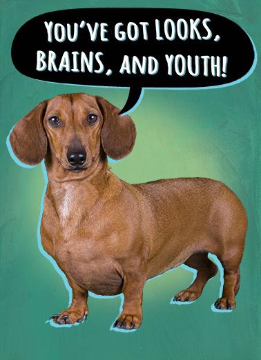 Looks Brains Youth Dachshund Ecard Cover