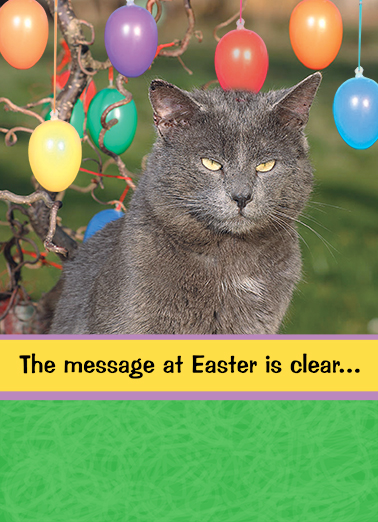 Message at Easter Cats Card Cover
