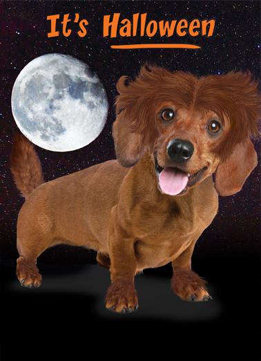 Moonlight Dachshund Halloween Ecard Cover