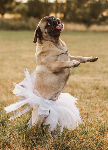 Pug In Tutu For Any Time Ecard Cover