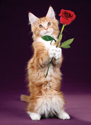 Purrfectly Valentine's Day Card Cover
