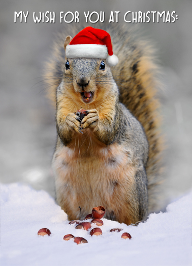 Squirrel In Snow Christmas Card Cover