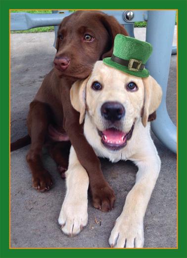 St. Patrick's Hug St. Patrick's Day Card Cover