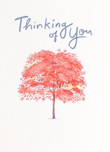 Thinking of You Tree Birthday Card Cover