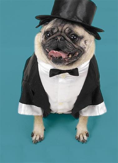 Tuxedo Pug Funny Animals Ecard Cover