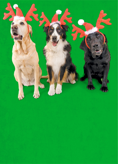 Woof Christmas Card Cover